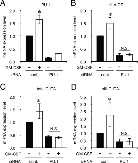 PU.1 knockdown cancels GM-CSF-mediated increase of mRNAs. A-D. Quantitative real-time PCR analysis of the mRNA expression of PU.1 (A), HLA-DRα (B), total CIITA (C), and CIITA driven by pIII (D) in PU.1 siRNA (PU.1)- or control siRNA (cont.)-introduced CAL-1 cells. Cells were incubated for 24h after siRNA transfection and cultured for additional 72h with GM-CSF stimulation. The results are expressed as means ± SEMs of three independent experiments. Each experiment was performed with duplicate samples. *, p