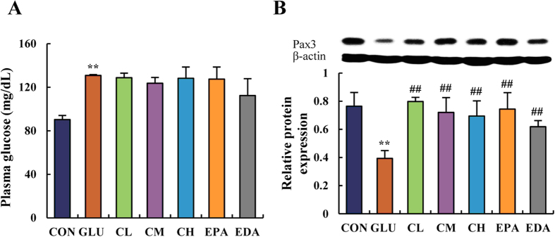 "5f restored neural tube development and marker expression in chick embryos on EDD 5. Glucose concentration ( A ) and Pax3 protein expression ( B ) were determined in chick embryos. The plasma glucose concentration was measured using a glucose oxidase-coupled spectrophotometric assay kit. Proteins were detected using the monoclonal antibody anti-Pax3 diluted 1:1000 (DSHB, USA) and visualized using anti-mouse <t>IgG</t> conjugated with horseradish peroxidase (HRP) and Pierce <t>ECL</t> Western Blotting Substrate (Thermo Fisher Scientific, USA) as the substrate of HRP. The abbreviations ""CON"", ""GLU"", ""CL"", ""CM"", ""CH"", ""EPA"", ""EDA"" mean ""controlled"", ""glucose treated"", ""low concentration of 5f treated"", ""mild concentration of 5f treated"", ""high concentration of 5f treated"", ""epalrestat treated"", ""edaravone treated"" groups, respectively. Values were expressed as mean ± SD in each group (n = 10). * P"