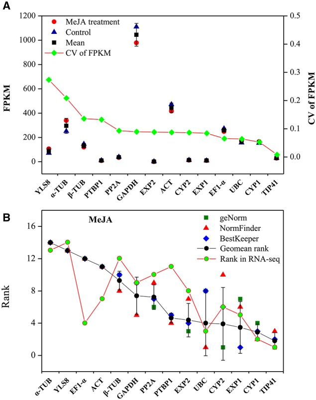 Validation of qRT-PCR results through comparison with RNA-seq expression profiles. (A) Stability ranking of candidate genes by CV of FPKM in RNA-seq. The gene with lower CV indicates more stable expression. (B) Correlation analysis between ranking of MeJA treatment subset by qRT-PCR and the ranking of RNA-seq. CV, coefficient of variation; FPKM, fragments per kilobase of exon model per million mapped reads.