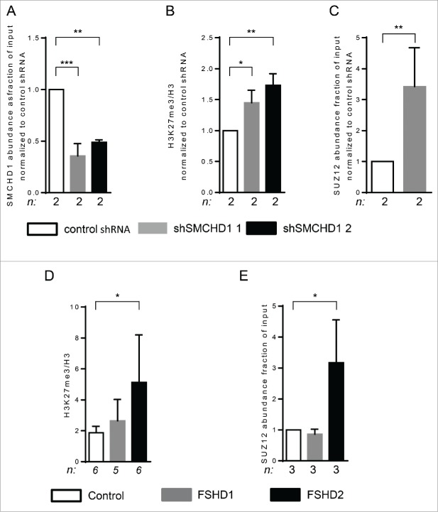 SMCHD1 depletion at D4Z4 leads to increased H3K27me3 and PRC2 binding. ( A ) ChIP-qPCR analysis showed a statistically significant reduction of SMCHD1 at qD4Z4 upon its lentiviral knockdown in control myotubes with 2 independent shRNA constructs in 2 independent control myotube cultures. ( B ) ChIP-qPCR analysis of H3K27me3 at qD4Z4 upon SMCHD1 depletion showed a significant increase at qD4Z4. Enrichment values were normalized to H3 enrichment values. ( C ) Normalized ChIP-qPCR analysis of SUZ12 upon SMCHD1 depletion showed a statistically significant increase at qD4Z4 in 2 independent experiments performed on 2 control myoblast cultures. n indicates sample size , error bars indicate SD, and significance was tested with Student t-test. ( D ) ChIP-qPCR analysis of H3K27me3 at qD4Z4 showed a significant increase in FSHD2 myotubes compared to controls. Enrichment values were normalized to H3 enrichment values. ( E ) ChIP-qPCR analysis of SUZ12abundance showed a significant increase in FSHD2 myotubes at qD4Z4. On panel A, B, D, and E, n indicates sample size, error bars display SD, and significance was tested using a one way-ANOVA followed by Bonferroni multiple comparison test. *= P