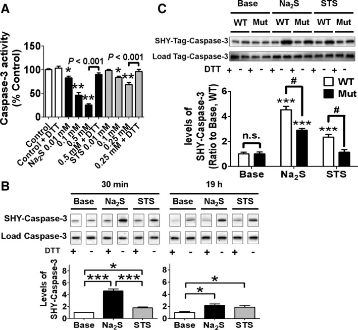 Effects of sulfhydration on cleavage of caspase‐3 or activity of cleaved caspase‐3. A, Activity of human recombinant caspase‐3 incubated with or without Na 2 S or STS with or without 2 mmol/L DTT at 37°C for 30 min. n=6 each; * or ** P