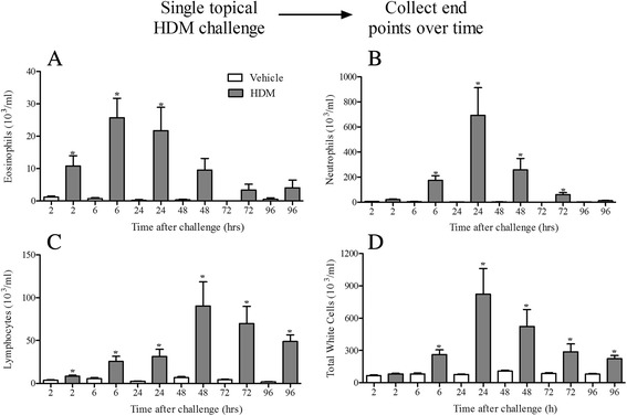 Effect of acute HDM dosing. Naïve male C57bl/6 mice were anaesthetised (4 % isoflurane in oxygen for 3 min) and challenged with i.t. saline or HDM. 2, 6, 24, 48, 72 and 96 h after challenge the lungs were lavaged and BALF eosinophil ( a ), neutrophil ( b ), lymphocyte ( c ) and total white cells ( d ) numbers were determined. Data ( n = 6) expressed as mean cell numbers (10 3 /ml) ± S.E.M. * p