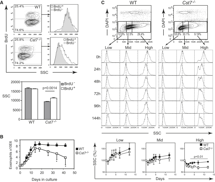 CF Stabilizes Granule Integrity and Eosinophil Viability (A) Naive mice received a single dose of BrdU 16 hr before sacrifice assessment of incorporation into eosinophils in the bone marrow. Example flow cytometry plots are shown together with means ± SEM from two independent experiments (n = 4 per group). (B) Bone marrow cells from WT or Cst7 −/− mice were cultured for 4 days in Flt-3L and SCF-1 prior to removal of dead cells by centrifugation over Ficoll-Paque. One million viable cells were seeded into IL-5 medium and eosinophil expansion and survival was monitored by cell counting and flow cytometric identification of Siglec F + cells. Means ± SD of five independent experiments are shown ( ∗ p