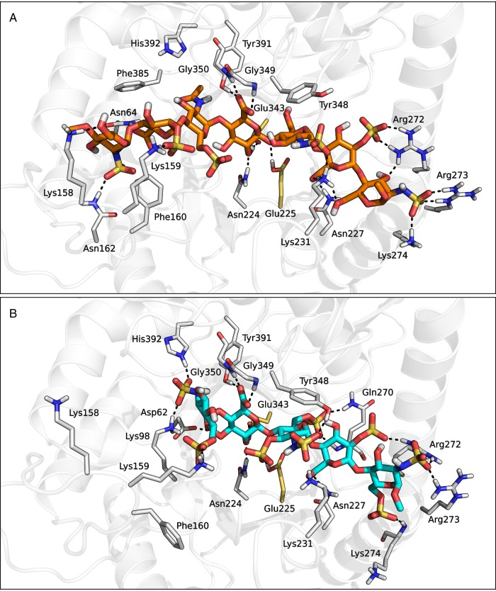 Heparanase-compound 1 ( A ) and heparanase-fondaparinux ( B ) complex structures obtained from the IFD procedure. This figure is available in black and white in print and in color at Glycobiology online.
