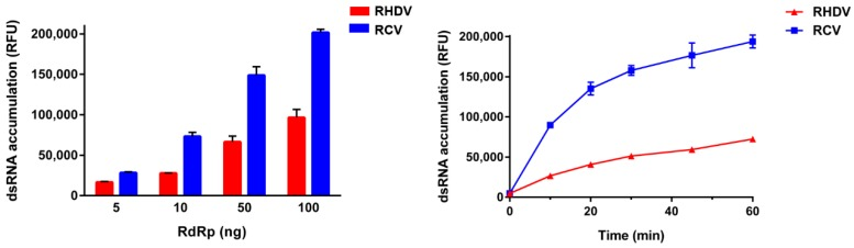 Comparison of RHDV and RCV RdRp activities. Purified recombinant RdRps were used to generate dsRNA from a poly(C) RNA (20 ng/μL) template using rGTP (0.5 mM) as substrate. Following incubation at 30 °C, reactions were stopped with 5 mM EDTA and dsRNA was quantified using the fluorescent dye PicoGreen. RHDV RdRp activity is shown in red, RCV RdRp activity is shown in blue. The results from a representative experiment are shown with average values and standard deviations from triplicate reactions for each measurement point. ( a ) The effect of RHDV and RCV RdRp concentrations on dsRNA formation over 15 min; ( b ) The synthesis of dsRNA catalysed by 20 ng of RHDV and RCV RdRps over a 1-h period. RFU—relative fluorescence units.