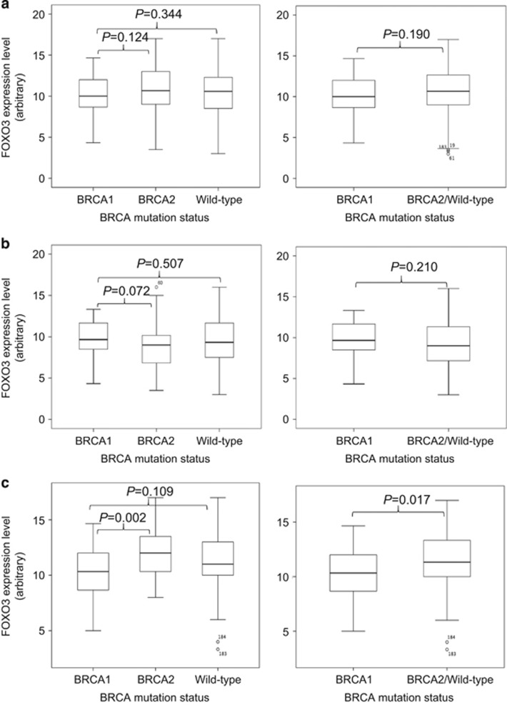 FOXO3 and EZH2 expression levels in breast cancers with different BRCA mutation. ( a ) Comparison of FOXO3 expression levels with different BRCA mutation status by Mann–Whitney U -rank test using all samples. ( b ) Comparison of FOXO3 expression levels with different BRCA mutation status using samples that express low levels of nuclear EZH2 by Mann–Whitney U -rank test. ( c ) Comparison of FOXO3 expression levels with different BRCA mutation status compared using samples that express high levels of nuclear EZH2 by Mann–Whitney U -rank test.