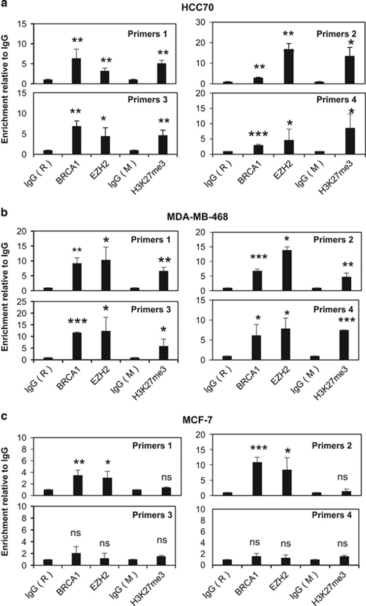 H3K27me3 is only enriched on the FOXO3 promoter in the BRCA1-deficient HCC70 and MDA-MB-468 cells but not in the BRCA1-competent MCF-7 cells, qRT–PCR analysis of immunoprecipitated chromatin for the recruitment of BRCA1, EZH2 and H3K27me3 to the endogenous FOXO3 promoter in HCC70, MDA-MB-468 and MCF-7 cells. ( a ) In HCC70, the ChIP–qPCR results showed that BRCA1, EZH2 and H3K27me3 were all recruited to the FOXO3 promoter albeit BRCA1 at low levels. ( b ) BRCA1 (C61G mutant), EZH2 and H3K27me3 were recruited to the FOXO3 promoter in MDA-MB-468 cells as revealed ChIP–qPCR analysis. ( c ) In MCF-7, BRCA1 and EZH2 were associated with the FOXO3 promoter but H3K27me3 was not. The results were normalized to the amount of Input and compared with the IgG-negative controls. IgG (R), rabbit IgG-negative control; IgG (M), mouse IgG-negative control. These experiments were repeated three times independently and the qRT–PCR results presented as mean±s.d. * P