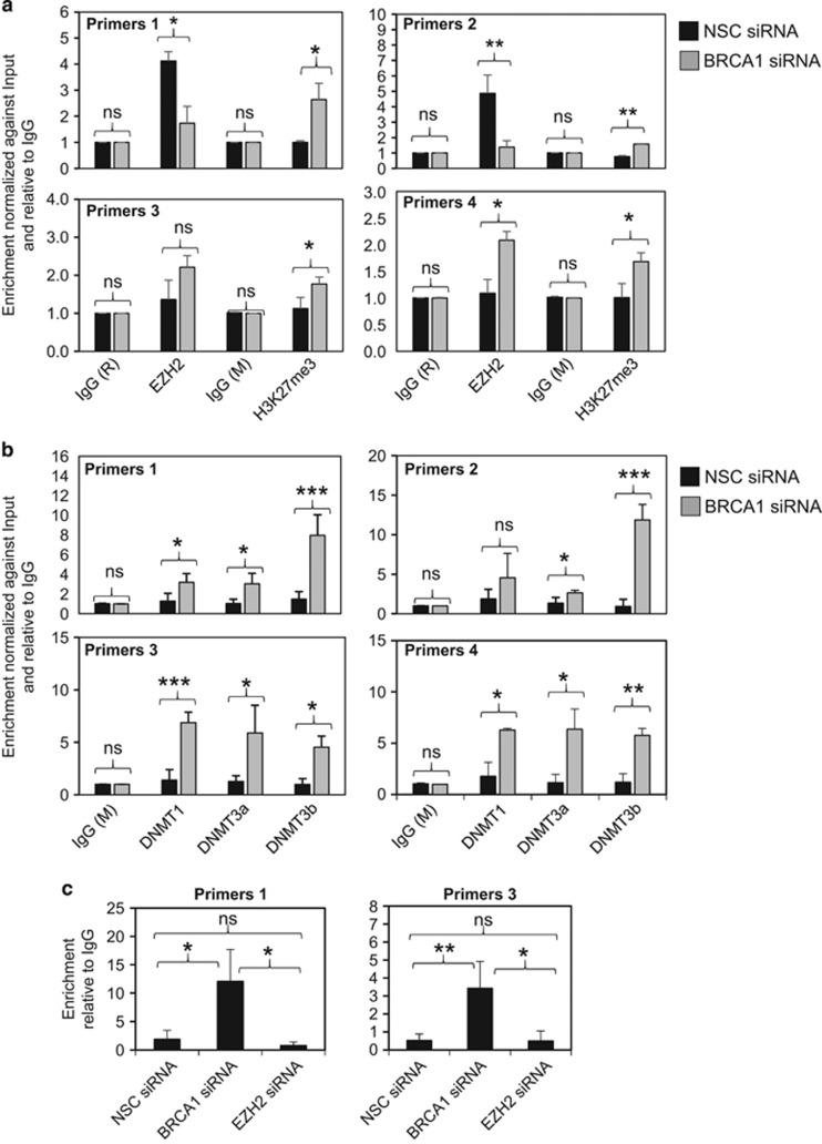 BRCA1 depletion causes the accumulation of H3K27me3, DNMT1/3a/3b and DNA methylation on the FOXO3 promoter in MCF-7 cells. BRCA1 was transiently knocked down using specific siRNA pool in MCF-7 for 48 h. ( a ) MCF-7 cells transfected with BRCA1 and non-silencing control (NSC) siRNA pools independently were analysed for the accumulation of H3K27me3 on the endogenous FOXO3 promoter by ChIP–qRT–PCR analysis. The results showed that despite the variable changes in EZH2 recruitment, there was always an increase in the accumulation of H3K27me3 marks on BRCA1 depletion. ( b ) MCF-7 cells transfected with BRCA1 and NSC siRNA pools independently were analysed for the recruitment of DNMT1/3a/3b to the endogenous FOXO3 promoter by ChIP–qRT–PCR analysis. The results revealed that BRCA1 knockdown culminated in an increase in DNMT1/3a/3b recruitment. ( c ) MCF-7 cells transfected with BRCA1 and NSC siRNA pools independently were analysed for FOXO3 promoter methylation by methylated DNA immunoprecipitation (MeDIP) qRT–PCR analysis. Despite the primers 2 and 4 consistently failed to generate reliable results, the results from primer sets 1 and 3 showed that BRCA1, but not EZH2, knockdown significantly enhanced FOXO3 promoter methylation. The results were normalized to the amount of Input and compared with the IgG-negative controls. These experiments were repeated three times independently and the qRT–PCR results presented as mean±s.d. * P