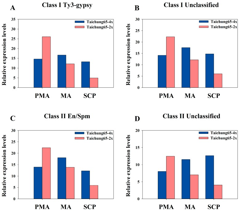 "Abundance of siRNAs transposable elements associated with Taichung65-4x and Taichung65-2x during pollen development stages: ( A ) Ty3-gypsy type of class I; ( B ) unclassified type of class I; ( C ) En/Spm type of class II; and ( D ) unclassified type of class II. PMA, MA and SCP represent pre-meiotic interphase, meiosis and single microspore stage, respectively. ""4x"" and ""2x"" represent the autotetraploid and diploid rice, respectively."