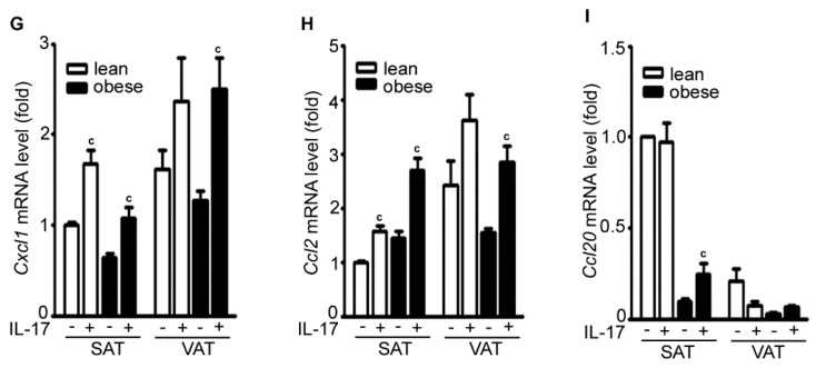 IL-17A differentially induces inflammatory gene expression in the adipose tissues of lean and obese mice. ( A – I ) Adipose tissues were cultured in serum-free <t>Dulbecco's</t> Modified Eagle Medium (DMEM) and treated without (−) or with (+) 20 ng/mL IL-17A for 2 h; mRNA expression of each gene was analyzed with qRT-PCR; SAT without IL-17A treatment served as the basal level for comparison; data represent mean ± SEM (error bars), n = 6 per group; a p