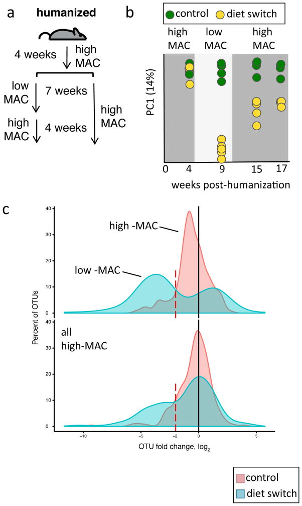 """Taxa reduction observed in low-MAC diet is largely reversible in a single generation a , Schematic of mouse experiment. Humanized mice (n=10) were maintained on a high-MAC diet for four weeks after which half of the mice were switched to a low-MAC diet for 7 weeks. These mice were then switched back to the high-MAC diet for > 4 weeks. b , Principle coordinate analysis of the UniFrac distance for 16S rRNA amplicon profiles from fecal samples collected from the diet switching mice (yellow, n=5) and control high-MAC diet mice (green, n=5). c , Distribution of OTUs fold changes for diet switching (blue, n=5) or control (red, n=5) groups comparing baseline (4 weeks post-humanization) versus week 9 (5 weeks post-low MAC diet for """"diet switch"""" group; top panel) and baseline versus week 15 (4 weeks after return to high-MAC diet for """"diet switch"""" group, bottom panel)."""