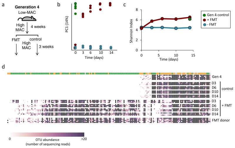 Reintroduction of lost taxa and a high-MAC diet restores microbiota diversity and composition a , Schematic of fecal transplant mouse experiment. b , Principal coordinate analysis of UniFrac distance for 16S rRNA amplicon profiles from fecal samples collected from fourth generation control mice on a high-MAC diet (green, n=6), fourth generation, diet-switching mice that received a fecal transplant (red, n=3), or did not (blue, n=3). c , Microbiota diversity as measured by Shannon index observed in the microbiota of mice that received a fecal transplant (red, n=3) or did not (blue, n=3). A green circle denotes the number of OTUs observed in fourth generation control mice consuming a high-MAC diet (n=6). Error bars are shown as s.e.m. d , Heat map of abundance of high-confidence OTUs (number of sequencing reads) from fourth generation diet-switching mice (n=3) three to 14 days after FMT (fecal microbiota transplant) and no FMT controls (n=3); taxonomic assignment is indicated at the top of each column (Bacteroidetes, green; Firmicutes, orange; other, grey). FMT donor (fourth generation control mice, n=5) and fourth generation diet-switching mice (n=5) four weeks after consuming high-MAC diet are also shown.