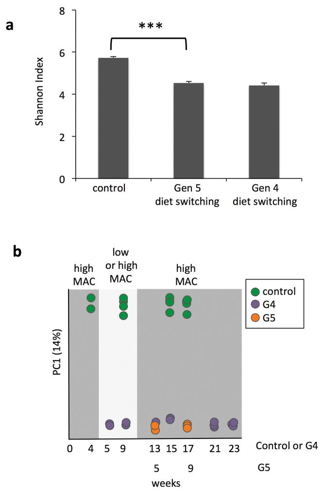 Microbiota diversity is not regained upon direct weaning the diet-switching group onto the high-MAC diet a , Alpha-diversity as measured by Shannon index of fecal microbiota from generation 5 mice from the high-MAC diet control (control) (n=6), generation 5, diet-switching group that was weaned directly onto the high-MAC diet (Gen 5 diet switching) (n=6), and generation 4 mice from the diet switching group after weaning and maintenance on the low-MAC diet for 13 weeks and returned to the high-MAC diet for four weeks (Gen 4 diet switching) (n=5). Error bars are shown as s.e.m. and P values are from a two-tailed Student's t-test b , Principal coordinate analysis of unweighted UniFrac distance for 16S rRNA amplicon profiles from fecal samples collected from first generation control mice on a high-MAC diet (green), fourth generation, diet-switching mice (purple), and fifth generation mice from the diet-switching lineage weaned directly onto the high-MAC diet (orange). Control is plotted as weeks post-humanization and generation 4 and 5 are plotted as age.