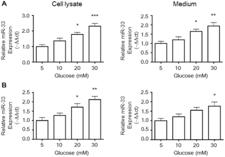 Glucose stimulates miR-33 expression in RAW264.7 macrophages and BMDMs. The effect of glucose on miR-33 levels in the cell lysate and medium was investigated in Raw264.7 murine macrophages (A) and BMDMs (B) by quantitative miRNA real-time PCR. Trizol reagent was used to extract total RNA in cellular lysates and medium from macrophages treated with glucose from 5 to 30 mM. Preparation of microRNA was isolated using the mirVANA microRNA isolation kit and microRNA assays were performed by real-time PCR. The relative miR-33 expression was calculated via the 2 −ΔΔCt method using cel-miR-39 as an endogenous control. The histogram shows the relative fold compared with the control group (set as 1). Results are expressed as mean±SEM of at least three independent experiments. * P