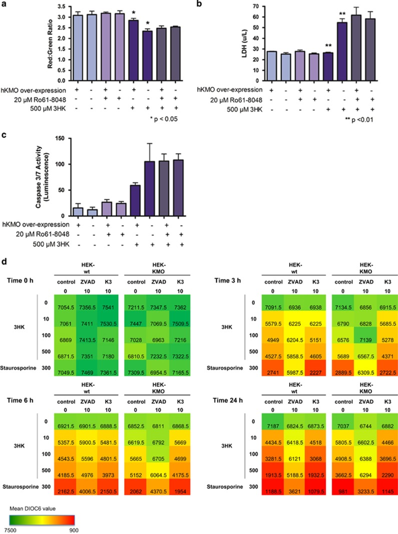 KMO protects against 3HK-induced cell death. Graphs showing ( a ) JC-1 readout, n =6 for each cell type and conditions, red:green ratio is significantly decreased ( P =0.0498) in wild-type cells incubated with 3HK compared with KMO cells, ( b ) LDH assay readout, n =6 for each cell type and conditions, LDH release is significantly increased ( P =0.0016) in wild-type cells incubated with 3HK compared with KMO cells, ( c ) caspase 3/7 activity readout, n =6 for each cell type and conditions, caspase activity is increased in wild-type cells incubated with 3HK compared with KMO cells. The S.E.M. is indicated by error bars on all graphs. Data are representative of three independent experiments for each of these assays. ( d ) Heat maps indicating DiOC6 staining in KMO cells verses wild-type cells with a 3HK-dose and time response in the presence and absence of Z-VAD-FMK, data are mean values of n =2 for each cell type and conditions from one independent experiment