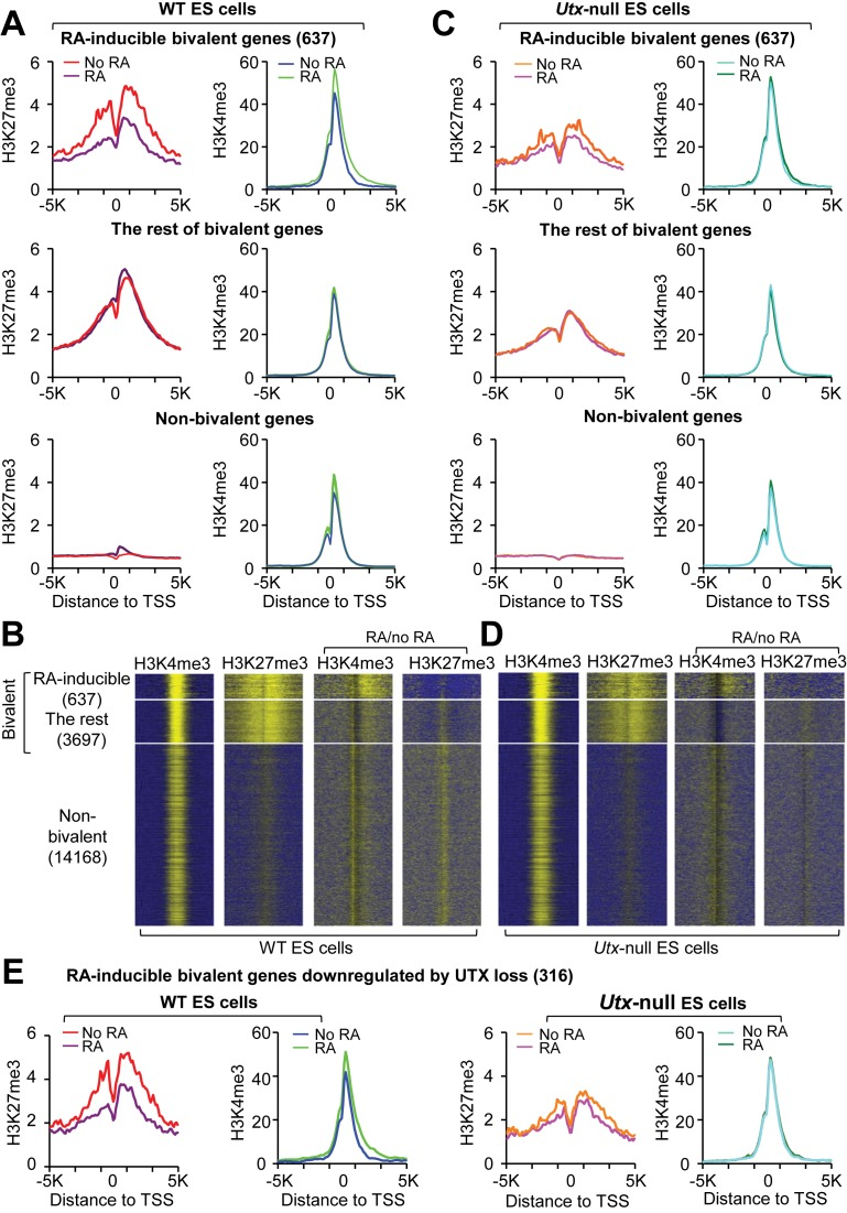 UTX resolves the bivalency of many RA-inducible bivalent genes during RA-driven differentiation of mouse ESCs. ( A and C ) Comparison of average ChIP-Seq reads densities for H3K4me3 and H3K27me3 between RA-treated and untreated WT cells (A) and between RA-treated and untreated Utx -null cells (C). The average values of three biological replicates of the 637 RA-inducible bivalent genes (top), the rest of bivalent genes (middle) and non-bivalent genes (bottom) were plotted from -5K to 5K around the transcription start site (TSS). ( B and D ) ChIP-Seq enrichment profiles for H3K4me3 (first column) and H3K27me3 (second column) levels and for RA-induced changes in H3K4me3 (third column) and H3K27me3 (fourth column) levels in WT (B) and Utx -null (D) mouse ESCs. ( E ) Comparison of ChIP-Seq reads densities for H3K4me3 and H3K27me3 between RA-treated and untreated WT cells and between RA-treated and untreated Utx -null cells. The 316 RA-inducible bivalent genes downregulated by UTX loss were used.