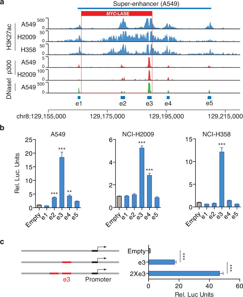 The activity of the MYC -LASE is predominantly driven by the e3 constituent enhancer (a) H3K27ac, p300 binding and DNase I hypersensitivity profiles in A549, NCI-H2009 and NCI-H358 cells reveal the constituent enhancers e1-e5 within the super-enhancer region. (b) Luciferase reporter assay (n = 3) measuring enhancer activity of e1-e5 in A549, NCI-H358 and NCI-H2009 lung adenocarcinoma cells. The pGL3 plasmid without the enhancer region (Empty) is used as a negative control. ( Y -axis) Relative Luciferase units are normalized to Renilla signal ± SEM. The P -value is derived from a t-test; (**) p ≤ p0.01; (***) p ≤0.001. (c) Enhancer activity of a duplicated e3 enhancer (2×e3) ± SEM as measured by luciferase reporter assay (n = 3). The P -value is derived from a t-test; (***) p ≤0.001.