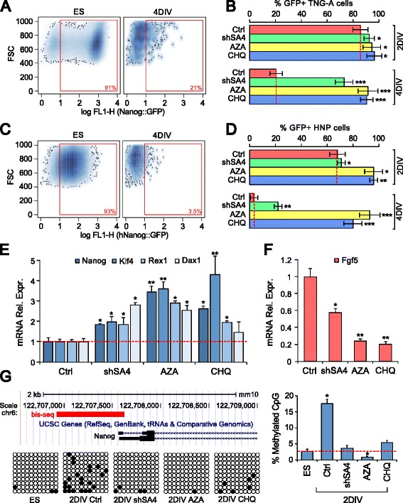 a Flow cytofluorimetry analysis of TNG-A Nanog::GFP cells at 4 DIV. b GFP-positive cell ratios at 2 DIV and 4 DIV after inhibition of SmarcA4 ( shSA4 ), DNMT ( AZA ), or KDM ( CHQ ) compared with control ( Ctrl ). c, d Similar analysis as in a and b , with a mESC line carrying GFP under the human Nanog promoter ( HNP ). e , f RT-PCR gene expression analysis. Values are relative to β-actin mRNA expression. The lowest and highest expression levels were normalized to 1 in the left and right histograms, respectively. g Nanog proximal promoter methylation. The scheme shows the region of the mouse Nanog promoter amplified for bisulfite-treated DNA sequencing (bis-seq). Black circles in grid rows indicate CpG methylation sites. The histogram shows the percentage of CpG methylation in different culture conditions as above. * p = 0.05, ** p = 0.01, *** p = 0.001 ( b , d , g , Student's t -test; e , f , REST randomization test). Error bars show standard error