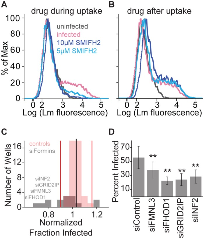 Formin activity is necessary for L . monocytogenes invasion in HUVEC. HUVEC were infected with JAT983. ( A, B ) Histograms of bacterial fluorescence intensity per cell. Infection was analyzed by flow cytometry 7–8 hours after infection. In each trace, a minor peak of higher bacterial fluorescence indicates infected HUVEC. ( A ) Effect of formin inhibition on bacterial uptake. SMIFH2 or vehicle control (DMSO) was present during invasion at the concentration indicated, and washed out with the addition of gentamicin. ( B ) Effect of formin inhibition on cell-to-cell spread. SMIFH2 or vehicle control was added with gentamicin and therefore was present only after invasion. ( C ) Effects of formin knockdown on bacterial uptake. HUVEC were treated with siRNAs targeting all 15 mammalian formins (gray bars) or non-targeting siRNAs (red bars) and analyzed by flow cytometry 7–8 hours after infection. The value for each sample is the average fold change (from 3 independent experiments with 4 biological replicates per experiment), relative to the mean percent infected among control siRNA wells (black line). Red vertical lines represent two SD from the mean. Names are listed for formins that were subsequently confirmed to be significantly different from controls. ( D ) Frequency of infected HUVEC (mean +/- SD, n = 4 biological replicates), for cells treated with siRNAs targeting FMNL3 , FHOD1 , GRID2IP , INF2 , or non-targeting control siRNA, and analyzed by microscopy 8 hours after infection. P-values for each siRNA condition relative to control (unpaired two-sided, two-sample t-test, Benjamini-Hochberg correction): 0.0086 (siFMNL3), 1.0670 *10 −5 (siFHOD1), 1.0670 * 10 −5 (siGRID2IP), 0.0011 (siINF2).