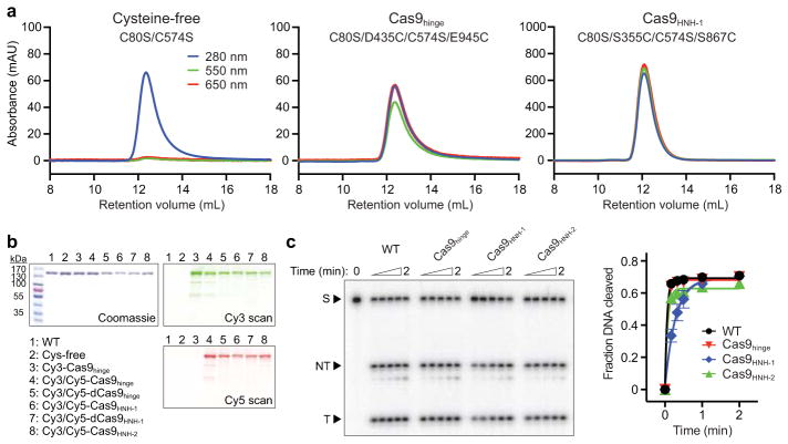 Biochemical preparation and DNA cleavage activity of dye-labeled Cas9 a , Size exclusion chromatograms of Cy3/Cy5-labeling reactions with cysteine-free Cas9 (C80S/C574S) or the two double-cysteine Cas9 variants used to generate Cas9 hinge and Cas9 HNH-1 . Reactions contained 10 μM Cas9 and 200 μM Cy3- and Cy5-maleimide, and were separated on a Superdex 200 10/300 column (GE Healthcare). Cysteine-free Cas9 was unreactive. b , Sodium dodecyl sulfate-polyacrylamide gel electrophoresis (SDS-PAGE) analysis of unlabeled and dye-labeled Cas9 variants. The gel was scanned for Cy3 and Cy5 fluorescence (right) before being stained with Coommassie blue (left). For gel source data, see Supplementary Figure 1 . c, Representative radiolabeled DNA cleavage assay with wild-type (WT) Cas9 and doubly-labeled Cas9 variants used in this study, resolved by denaturing PAGE (left); quantified data and exponential fits are shown on the right. S, substrate; NT, cleaved non-target strand; T, cleaved target strand. Error bars represent the standard deviation from three experiments.