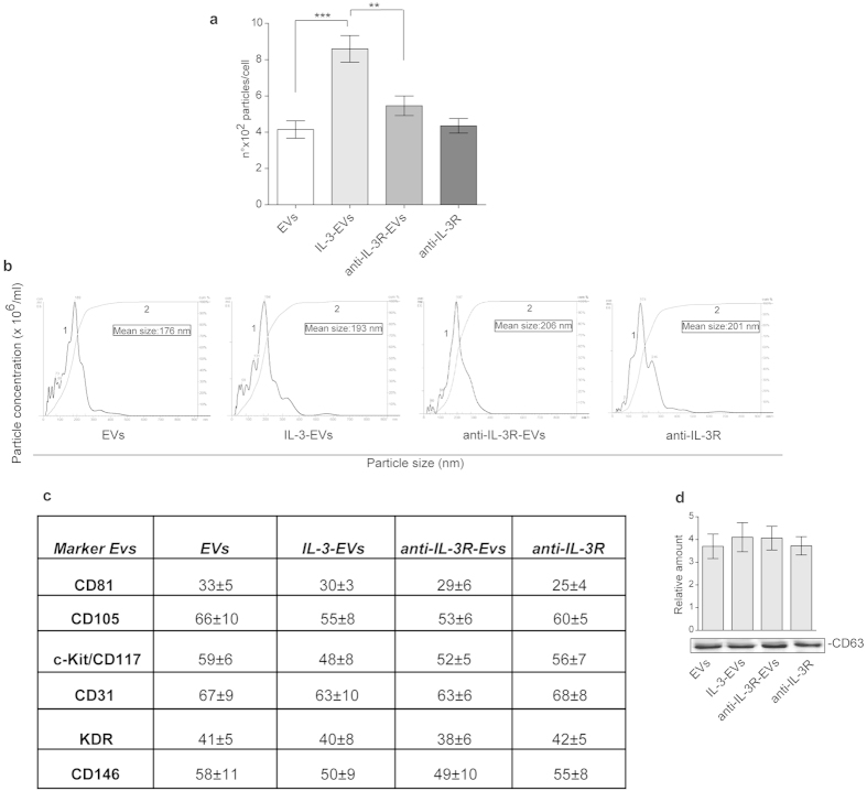 Characterization of EC-derived EVs. ( a ) Number of EV particles (mean ± SEM) calculated per cell at isolation. Data refer to EVs from ECs (EVs), IL-3-treated ECs (IL-3-EVs) or from ECs pre-treated with the anti-IL3Ralpha blocking antibody (anti-IL-3R) and then stimulated with IL-3 (anti-IL-3R-EVs). The anti-IL-3R alone was also used. The results are representative of four different experiments performed in triplicate ( n = 4) (*** p
