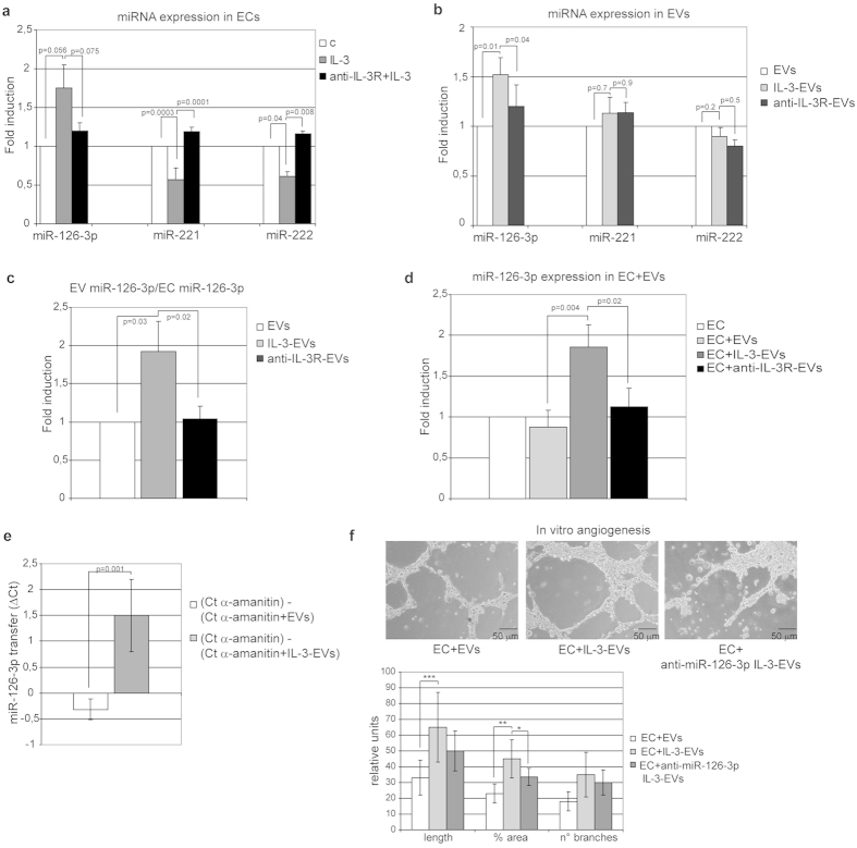 IL-3 dictates the content of miR-126-3p in EC-derived EVs. (a) miR‐126-3p, miR-221 and miR-222 expression was evaluated by quantitative real-time PCR (qRT-PCR) on ECs, untreated ( c ) or treated with IL-3 (IL-3) in the presence or in the absence of the anti-IL3Ralpha blocking antibody (anti-IL-3R). Data normalized to RNU6B are representative of four different experiments performed in triplicate (n = 4) ( p = 0.056 IL-3 vs none and p = 0.075 IL-3 vs anti-IL3R+ IL-3 for miR-126-3p; p = 0.0003 IL-3 vs none and p = 0.0001 IL-3 vs anti-IL3R+ IL-3 for miR-221: p = 0.04 IL-3 vs none and p = 0.008 IL-3 vs anti-IL3R+ IL-3 for miR-222) (b) miR‐126-3p, miR-221 and miR-222 expression was evaluated as above on EVs recovered from ECs, treated as above ( n = 5) ( p = 0.01 IL-3-EVs vs EVs and p = 0.04 IL-3-EVs vs anti-IL3R-EVs for miR-126-3p; p = 0.7 IL-3-EVs vs EVs and p = 0.9 IL-3-EVs vs anti-IL3R-EVs for miR-221: p = 0.2 IL-3-EVs vs EVs and p = 0.5 IL-3-EVs vs anti-IL3R-EVs for miR-222). (c) miR‐126-3p expression evaluated on EC-derived EVs was normalized to EC miR‐126-3p content. Data are representative of five experiments performed in triplicate ( n = 5) ( p = 0.03 IL-3-EVs vs EVs and p = 0.02 IL-3-EVs vs anti-IL-3R-EVs). (d) miR‐126-3p expression was evaluated by qRT-PCR on ECs untreated or treated with EVs derived from ECs stimulated as above. Data normalized to RNU6B are representative of four different experiments performed in triplicate ( n = 4) ( p = 0.004 EC+ IL-3-EVs vs EC+ EVs and p = 0.02 EC+ IL-3-EVs vs EC+ anti-IL-3R-EVs). (e) ECs incubated in the presence of 50 μ g/ml of α -amanitin to inhibit EC transcription were stimulated or not stimulated with EVs or IL-3-EVs. EV-miR-126 transfer was evaluated by q-RT-PCR. The difference in Ct values (Δ Ct) between α -amanitin-treated ECs alone or with the indicated EVs is reported ( p = 0.001 ) (mean ± SD). (f) Representative photomicrographs of an in vitro angiogenesis assay performed on ECs treated as indicated. The quanti