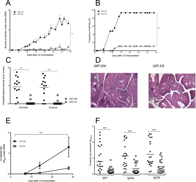 Development of arthritis and B cell responses in the novel model of tolerance to collagen-induced arthritis. Severity (A) as well as incidence of arthritis (B) were determined by macroscopical examination (LNT-Ctrl n = 25 (day 0–42), n = 17 (day 43–49) LNT-CII n = 24 (day 0–42), n = 11 (day 43–49)). The experiments have been repeated five times and the graph shows the pooled results from three experiments (C) Histopathological examination of synovitis and bone/cartilage erosivity at termination of two pooled experiments (days 42–49). (D) Histological photos from an LNT-Ctrl and an LNT-CII mouse at day 42 after CII immunization, B = bone, C = cartilage, S = synovium. Scale bar 100 μm. (E) Development of CII specific IgG antibodies measured by ELISA in serum at indicated time points during CIA (n = 3-6/group). (F) Serum levels of CII-specific IgG and subclasses IgG1, IgG2a and IgG2b at days 42–49. Experiments in Fig E and F have been performed at least twice. Statistical analysis was performed by linear regression in (A, D), logistic regression in (B) and Mann-Whitney U-test in (C and E), mean±SEM.