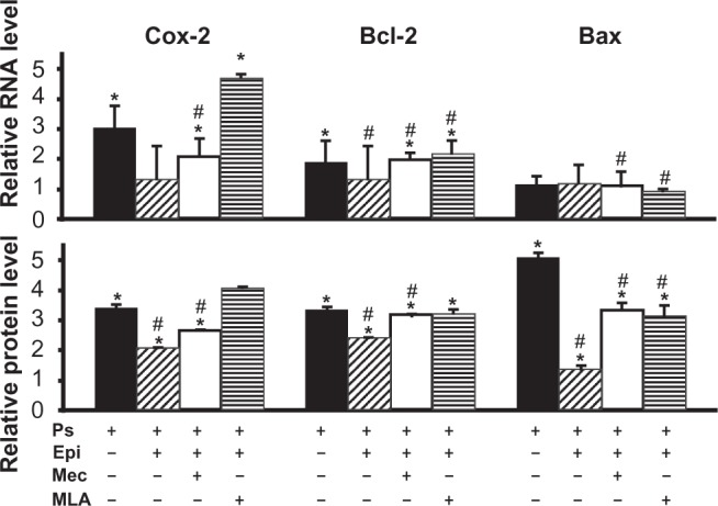 Nicotinic effects on pansorbin-induced activation of Daudi cells. Daudi cells, 3 × 10 6 cells/well, were incubated for 16 hours in a humid, 5% CO 2 incubator in the culture medium containing 0.05% pansorbin (Ps) in the absence or presence of 1 μM epibatidine (Epi) ± 50 μM Mec or 100 nM MLA, after which the expression of the genes encoding Cox-2, Bcl-2, and Bax at the mRNA and protein levels was measured by qPCR and ICW, respectively, as detailed in Materials and methods. The results are expressed as fold of control values determined in intact Daudi cells taken as 1. Notes: * P