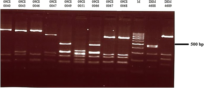Agarose gel electrophoresis of fla A typing products of Vietnamese Campylobacter isolates digested with <t>Dde</t> I (M—100 bp DNA ladder)