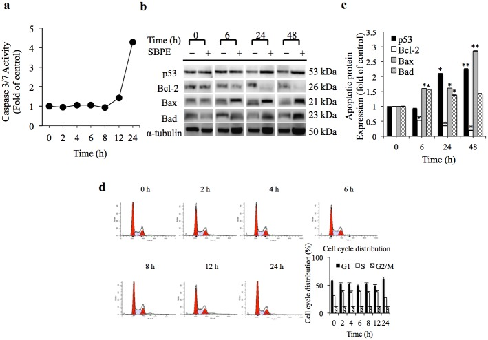 SBPE induced apoptosis. (a) After administration of SBPE 10 mg/mL; the Caspase3/7 reagent was used to detect their performances. (b) The effects that SBPE has on the protein control factors related to A549 cell apoptosis and anti-apoptosis. All the gels have been run under the same experimental conditions. (c) Statistical chart for protein performance. (d) FACS analyzes for cell cycle distribution, and use of the ModFit LT software to analyze cell cycle distribution.