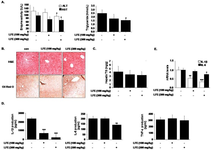 Effects of LFE on hepatic steatosis in KKAy mice. After 8 weeks of LFE administration, plasma levels of ALT and AST, and TG were determined using commercial kits (A). Liver tissues were frozen and tissue sections were stained with H E or Oil Red O, and examined under an optical microscope (B). Hepatic TG contents were measured using commercial kit (C). Plasma levels of proinflammatory cytokines (IL-1β, IL-6, and TNF-α) were measured using ELISA kits (D). Hepatic mRNA levels of IL-1β and IL-6 were measured (E). *P