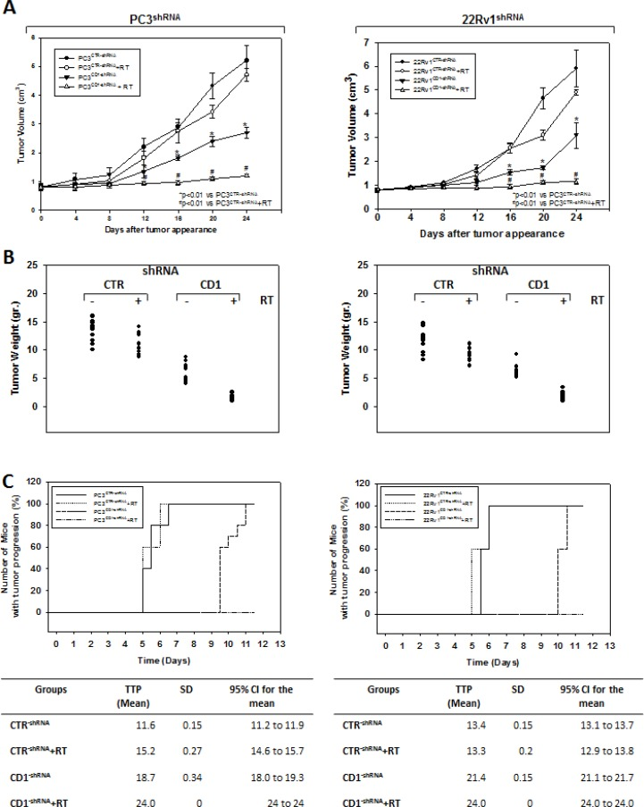Silencing cyclin D1 radiosensitizersPC3 and 22Rv1 cell lines in vivo Mice xenografted with shRNA-cyclin D1- (CD1) and shRNA-control-transduced (CTR) PC3 (Left Panel) or 22Rv1 (Right Panel) cells subjected to radiation treatment (5 fractions of 2 Gy were delivered over 5 consecutive days for a total dose of 10 Gy) starting when the tumor volume reached 0.5–1.0 mm 3 (T0). ( A ) Tumor volume, ( B ) tumor weights and ( C ) number of mice with tumor progression.