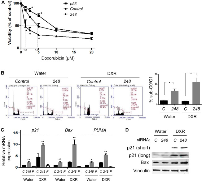 Allele-specific silencing of mutp53 increases doxorubicin sensitivity by restoration of wtp53 activity A. MTT assays. HCT116 wt/R248W cells transfected with control , <t>p53</t> , or 248 siRNAs were treated with water (control) or varying concentrations of doxorubicin for 48h, followed by MTT assays. B. PI staining and flow cytometry, using cells transfected with control or 248 <t>siRNA</t> and treated with water (control) or 1.25 μM of doxorubicin (DXR) for 24h. Representative results of flow cytometry (left) and summarized graphs showing sub-G0/G1 apoptotic fraction (right). C. QRT-PCR for p53 target genes, p21, BAX , and PUMA , using HCT116 wt/R248W cells transfected with control (C) , 248, or p53 (P) siRNAs with treatment of water or DXR for 24h. Data are presented as relative values to the water-treated, control siRNA-transfected group normalized by the value to GAPDH . D. Western blotting for p21, BAX, and Vinculin following treatment of control ( C ) or 248 siRNA-transfected HCT116 wt/R248W cells with water or DXR treatment for 24h. Short: short exposure, Long: long exposure. Error bars: means ± S.D. from three independent experiments. *, P