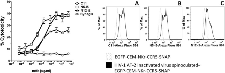 ADCC assay using cells spinoculated with AT-2 inactivated HIV-1 BaL virions. Left panel. EGFP-CEM-NKr-CCR5-SNAP cells were labeled with Alexa Fluor 647-SNAP tag and then spinoculated with HIV-1 Bal AT-2 virus at 2000 rpm for 2 h at 12 °C. After two washes, cells were incubated with dilutions of mAbs (C11, N5-i5, N12-i2 or Synagis) for 15 min at RT, then PBMC were added to the reaction for 3 h at 37 °C. At the end of the incubation, the samples were washed with PBS, fixed with 1% paraformaldehyde and analyzed by flow cytometry. The ADCC results are representative of three independent assays and the bars indicate the range of the values of cytotoxicity of duplicate samples. Right panel. The efficiency of the spinoculation was evaluated by cell surface staining with 2 μg/ml Alexa Fluor-594-conjugated mAbs C11 (Panel A), N5-i5 (Panel B) or N12-i2 (panel C).