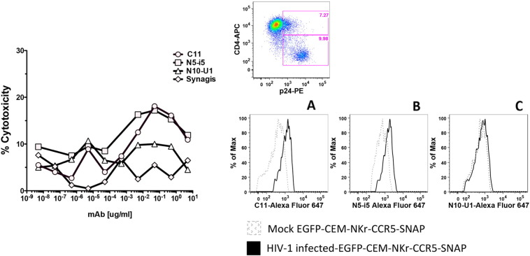 ADCC assay using cells infected with HIV-1 BaL IMC. Left panel. EGFP-CEM-NKr-CCR5-SNAP cells were spinoculated with HIV-1 Bal molecular clone at 2000 rpm for 2 h at 12 °C. After 5 days of co-culture with the virus, cells were washed twice, labeled with Alexa Fluor 647-SNAP tag dye and incubated with dilutions of mAbs (C11, N5-i5, N10-U1 or Synagis) for 15 min at RT, then PBMC were added to the reaction for 3 h at 37 °C. At the end of the incubation, the samples were washed with PBS, fixed with 1% paraformaldehyde and analyzed by flow cytometry. The ADCC data represent the typical results obtained in three independent experiments. Upper right panel. The efficiency of the infection was evaluated by staining of the cells with live/dead (not shown), CD4-APC and p24-PE. Lower right panel. Binding of infected EGFP-CEM-NKr-CCR5-SNAP cells with 5 μg/ml Alexa Fluor-647-conjugated mAbs C11 (panel A), N5-i5 (panel B) or N10U1 (panel C).