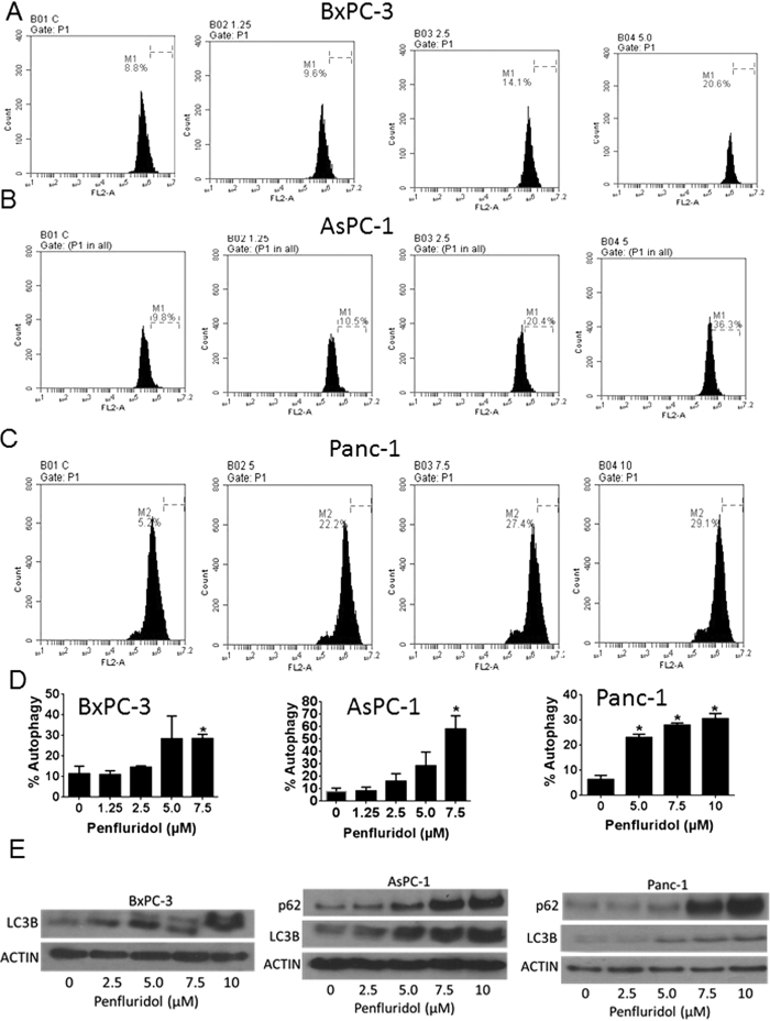Induction of autophagy with penfluridol treatment. ( A–D ) BxPC-3, AsPC-1 and Panc-1 cells were plated in six well plates and treated with different concentration of penfluridol for 24 h. Cells were stained with 0.4 μg/ml acridine orange and evaluated by Accuri C6 flow cytometer. Values were plotted as means ± SD. Experiment was repeated three times. *Statistically significant when compared with control at p ≤ 0.05. ( E ) BxPC-3, AsPC-1 and Panc-1 cells were treated with different concentration of penfluridol for 24 h. Representative blots showing concentration-dependent effect of penfluridol on p62 and LC3B expression. Actin was used as loading control. Figure shown is the representative blots of at least three independent experiments.