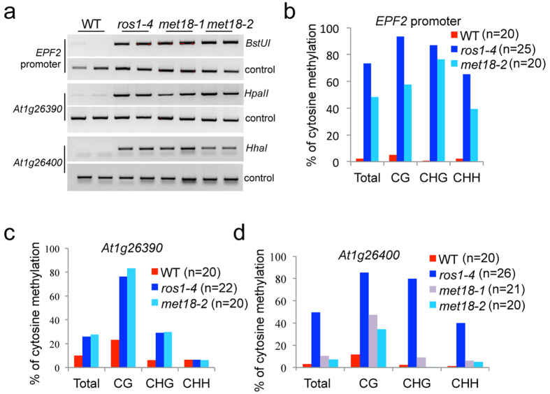 Dysfunction of MET18 causes DNA hypermethylation at the EPF2 promoter, At1g26390 and At1g26400 loci. ( a ) Analysis of DNA methylation levels at the EPF2 promoter, At1g26390 and At1g26400 loci using chop-PCR. The methylation-sensitive restriction enzymes used were Bst UI, Hpa II and Hha I. DNA hypermethylation results in no cleavage by the enzymes and increased levels of the PCR product. Undigested controls are shown in the lower panel. ( b – d ) Bisulfite sequencing data showing the effects of MET18 mutations on DNA methylation in different sequence contexts in the EPF2 promoter ( b ), At1g26390 ( c ) and At1g26400 ( d ). For each sample, at least 20 clones were analyzed and the percentage of DNA methylation was calculated from the indicated number of clones.