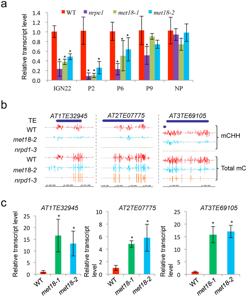 MET18 is required for the generation of Pol V-dependent noncoding RNAs and transcriptional gene silencing. ( a ) Detection of Pol V-dependent noncoding RNAs by real-time PCR, NP is a none NRPE1 enrichment region. ( b , c ) Snapshots in the Integrated Genome Browser showing the DNA methylation levels, and bar diagrams showing the real-time PCR-based expression analysis of the hypomethylated TEs in different genotypes. TUB8 serves as an internal control. Standard errors were calculated from three biological replications, * P