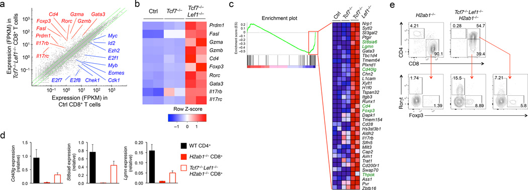 Tcf1 and Lef1 deficiency perturbs CD8 +  T cell integrity (a)  RNA-Seq analysis of genes upregulated (red) or downregulated (blue) in TCRβ hi CD24 − CD69 − CD8 +  mature thymocytes sorted from  Tcf7 −/− Tcf7 −/− Lef1 −/− , and control littermates, with the average FPKM values of two replicates of control (Ctrl)  vs. Tcf7 −/− Lef1 −/−  CD8 +  T cells shown in a scatterplot, where the green lines denote gene expression changes of ≥2 fold.  (b)  Select upregulated genes (right margin) in  Tcf7 −/− Lef1 −/− CD8 +  mature thymocytes relative to control and  Tcf7 −/−  CD8 +  thymocytes as shown in a heatmap.  (c)  GSEA showing enriched expression of genes in the CD4 +  T cell gene set in  Tcf7 −/− Lef1 −/−  CD8 +  mature thymocytes, with the enriched genes (red rectangle in the enrichment plot) displayed in a heatmap, where CD4 +  signature genes are highlighted in green.  (d)  Quantitative RT-PCR analysis of  Cd40lg, St8sia6  and  Lgmn  expression (relative the  Hprt  housekeeping gene) in CD4 +  mature thymocytes sorted from wild-type (WT) mice, CD8 +  mature thymocytes sorted from  H2ab1 −/−  or  Tcf7 −/− Lef1 −/− H2ab1 −/−  mice. ( e ) Intracellular staining for Foxp3 and Rorγt proteins in CD8 +  mature thymocytes in  H2ab1 −/−  mice, CD8 + CD4 −  and CD8 + CD4 +  thymocytes in  Tcf7 −/− Lef1 −/− H2ab1 −/−  mice. Numbers adjacent to outlined areas indicate percent Foxp3 +  and Rorγt +  cells in lower panels. Data are from one experiment measuring duplicate samples ( a-c ), from 2 experiments ( d , means ± s.d., n ≥ 4), or representative of ≥ 5 experiments ( e ).