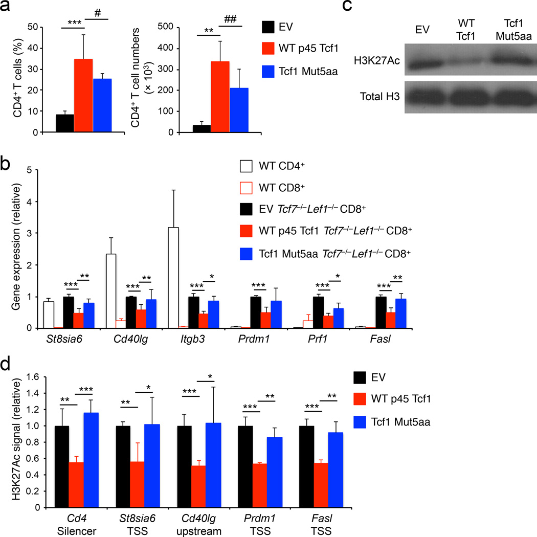 The Tcf1 HDAC activity is essential for establis hing CD8 +  T cell identity ( a ) Analysis of frequency (left) and numbers (right) of donor-derived CD45.2 + GFP + TCRβ + CD4 +  T cells in the spleens of BM chimeras that were reconstituted with  Tcf7 −/− Lef1 −/−  lineage-negative bond marrow cells retrovirally infected with empty vector (EV), WT p45 Tcf1, or Tcf1 Mut5aa retrovirus. ( b ) Quantitative RT-PCR analysis of gene expression (relative to  Hprt ) in wild-type (WT) splenic CD4 +  or CD8 +  T cells, splenic CD45.2 + GFP + TCRβ + CD8 +  T cells sorted from the EV-, WT p45 Tcf1-, or Tcf1 Mut5aa-complemented  Tcf7 −/− Lef1 −/−  BM chimeras. For each gene, its expression in EV-complemented cells was set as 1, and that in other cell types was normalized accordingly. ( c ) Immunoblot analysis of H3K27Ac and total H3 histone in histone protein extracted from splenic CD45.2 + GFP + TCRβ +  CD8 +  T cells sorted from the EV-, WT p45 Tcf1-, or Tcf1 Mut5aa-complemented  Tcf7 −/− Lef1 −/−  BM chimeras. ( d ) ChIP-qPCR analysis of relative H3K27Ac signals at select gene loci in splenic CD45.2 + GFP + TCRβ + CD8 +  T cells sorted from EV-, WT p45 Tcf1-, or Tcf1 Mut5aa-complemented  Tcf7 −/− Lef1 −/−  BM chimeras. For each gene locus, the relative H3K27Ac signal in EV-complemented cells was set as 1, and that in other cell types was normalized accordingly. Data are from 3 experiments ( a, b , means ± s.d., n = 4–5), or representative from 3 experiments ( c ), or from 2 experiments with each sample measured in duplicates ( d , means ± s.d.). #, p = 0.11; ##, p = 0.06; *, p