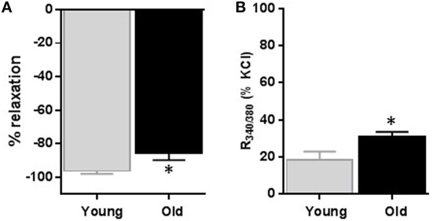 Effect of nifedipine on diameter and relative intracellular calcium level changes . Average data of diameter changes (A) and intracellular calcium level as indicated by R340/380 (B) of small mesenteric arteries isolated from young and old rats that were pre-contracted with 60 mM KCl and then relaxed with 1 μM nifedipine. Values are mean ± SEM of % changes from KCl contraction. * denotes significance at P ≤ 0.05.