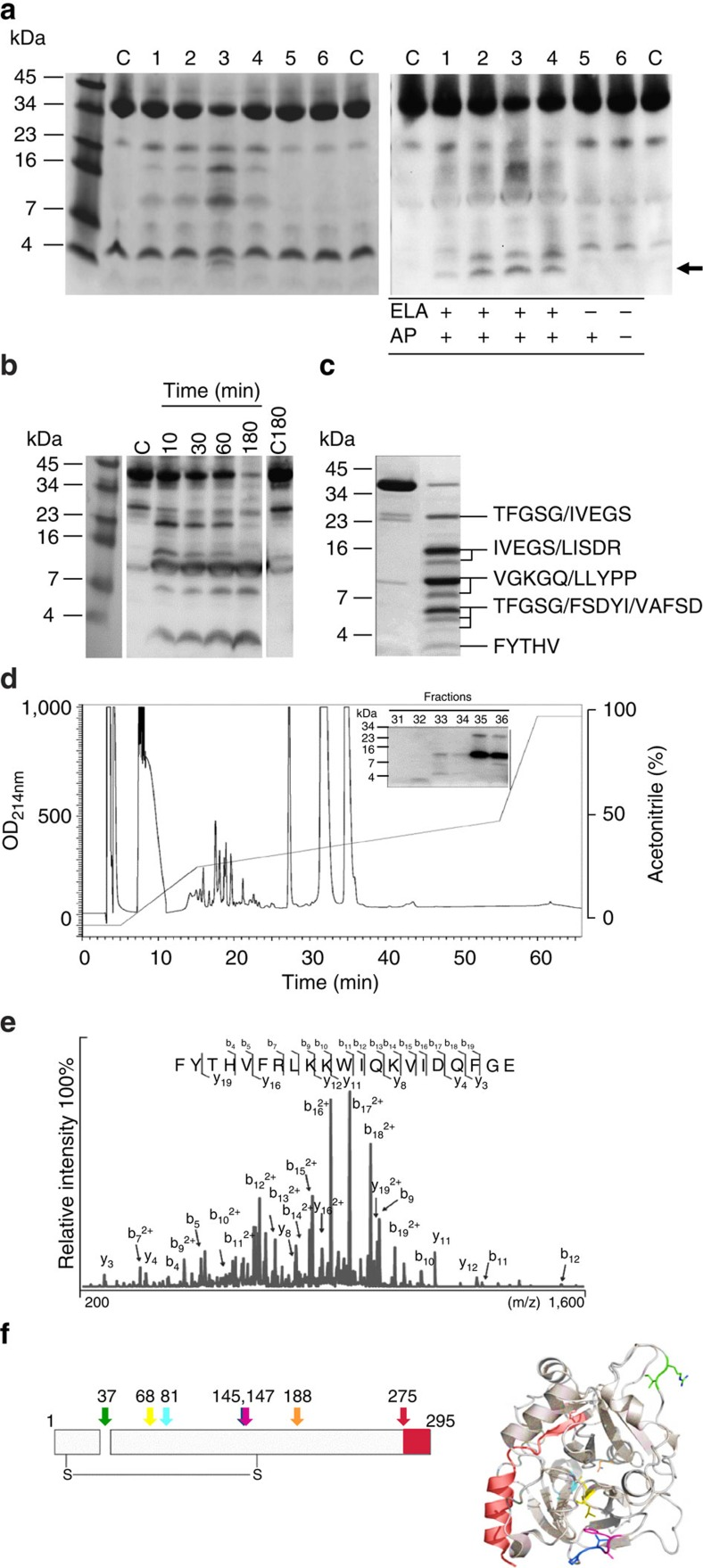 Isolation of the C-terminal-derived thrombin peptide FYT21. ( a ) Human <t>α-thrombin</t> was digested with CM from several protease producing (1:PAO1, 2–4: clinical isolates) and non-producing (5: PAOB1; 6: clinical isolate) strains for 1 h at 37 °C and analysed by SDS–PAGE (left) and western blotting (right). Thrombin alone was used as a control (c). The arrow indicates peptides of similar molecular mass as the endogenous HVF18, which are only formed in the presence of CM of elastase producing strains. ( b ) Thrombin was digested with purified P. aeruginosa elastase for various periods of time and analysed using western blotting. Thrombin alone was used as a control directly (C) or after 3 h incubation at 37 °C (C180). ( c ) Thrombin fragments obtained after 1 h digestion, followed by separation by SDS–PAGE, were subjected to N-terminal sequencing. ( d ) HPLC profile of digested thrombin. The insert shows the fractions containing C-terminal epitopes of thrombin. The full sequence of the peptide in fraction 32 was obtained using Orbitrap analysis ( e ). ( f ) A 2D (showing the inter-chain disulphide bond) and a 3D model of thrombin depicting all cleavage sites of elastase. Each colour represents one cleavage site. The C-terminal peptide FYT21 is depicted in red. Of note, the sequences TFGSG and IVEGS represent the N termini of the light and heavy chains, respectively.