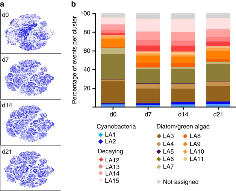 Tracking and quantification of biofilm community structure changes after temperature increase. ( a ) viSNE submaps ( Fig. 2a ) belonging to days 0, 7, 14 and 21 post temperature increase. More colour-intense regions of the submaps depict regions of higher cell density. Similarity analysis of technical replicates (that is, three per sample), biological replicates (that is, five independent microcosms) and time points indicated that the detected changes in community structure were governed by time point and not biological or technical noise ( Supplementary Fig. 10 ). ( b ) Quantification of subpopulations defined in Fig. 2b , pooled from five biological replicates for each time point after temperature increase (all biological replicates are depicted in Supplementary Fig. 11 ). Statistical analysis of subpopulation sizes is available in Supplementary Fig. 9 .