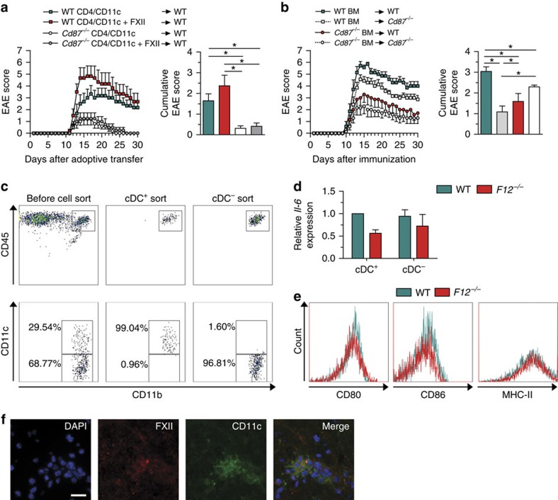FXII influences DCs in the CNS. ( a ) EAE development is shown in WT mice after adoptive transfer of CD4 + lymphocytes and CD11c + cells isolated from WT or Cd87 −/− mice on day 12 post immunization and restimulated with 10 μg ml −1 MOG 35–55 and 0.5 ng ml −1 IL-12 with or without 60 nM FXII for 72 h. Mean clinical and mean cumulative scores±s.e.m. over time of three independent experiments are given (non-parametric Mann–Whitney U -test). ( b ) BM chimeras were created by transferring WT and Cd87 −/− BM into WT and Cd87 −/− recipient mice after radiation. Mean clinical and mean cumulative scores±s.e.m. of EAE from three independent experiments are shown (non-parametric Mann–Whitney U -test). ( c , d ) Brain-infiltrating leukocytes (BILs) were separated into cDC + and cDC − by sorting via flow cytometry based on indicated surface markers at d max after EAE induction. Both subsets from WT or F12 –/– mice were analysed for Il-6 expression by real-time reverse transcription–PCR using 18s rRNA for normalization. Data are given as mean±s.e.m. of two experiments, each experiment generated from pooled brain and spinal-cord-derived cells of n =6–7 mice per group and presented as fold change in normalized gene expression relative to WT controls. ( e ) Flow cytometric analysis of BILs from WT and F12 −/− animals at d max after EAE induction determined the expression of CD80, CD86 and MHC-II in cDCs that were pre-gated for CD45 high CD11b + CD11c + cells. Data are representative of two independent experiments with four mice per genotype. ( f ) Histological analysis of spinal cord sections stained for the nucleus (4,6-diamidino-2-phenylindole (DAPI), blue), FXII (red) and CD11c (green) from the lumbar region of EAE WT animals at d max . Scale bar, 100 μm. * P