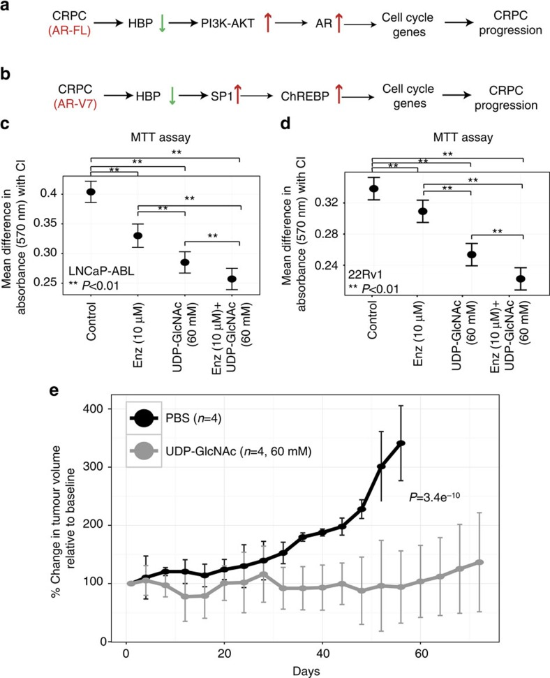 Therapeutic targeting of HBP in CRPC. ( a ) Decreased HBP expression in CRPC tumours containing AR-FL is associated with increased activity of PI3K-AKT that could activate AR. This activates cell cycle genes leading to increased proliferation driving CRPC progression. ( b ) In CRPC containing AR-V7, decreased HBP expression activates SP1-regulated ChREBP expression leading to stimulation of cell cycle genes, increased proliferation and tumour progression. ( c ) MTT assay results for LNCaP-ABL ( n =9) cells treated with vehicle (PBS+dimethylsulphoxide) or 10 μM enzalutamide (Enz) or 60 mM UDP-N-acetylglucosamine (UDP-GlcNAc) or both enz+UDP-GlcNAc for 96 h. ( d ) Same as in c but treatments were done on 22Rv1 cells ( n =8). In both c and d , differences in the level of mean absorbance with corresponding confidence interval (CI) to control obtained for each of the conditions ( x axis) is represented on the y axis. Comparisons of all treatments with control group in c , d were significant at a P -value of 0.01 (Bonferroni corrected). Pairwise comparisons of either Enz or combination of Enz+UDP-GlcNAc with other treatments were significant at a P -value