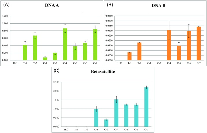 Quantitative real-time PCR analysis of coinfected cotton plants. Graphs show the determined titers of (A) virus ( Tomato leaf curl New Delhi virus [ToLCNDV] DNA-A and Cotton leaf curl Kokhran virus -Burewala CLCuKoV-Bur), (B) ToLCNDV DNA-B and (C) Cotton leaf curl Multan betasatellite (CLCuMB). The DNA samples used in the PCR reactions were extracted from a healthy cotton plant (H.C), tomato plants infected with ToLCNDV (T1 and T2), field collected cotton plants with severe cotton leaf curl disease symptoms either infected with only CLCuKoV-Bur/CLCuMB (C-1 and C-2) or coinfected with CLCuKoV-Bur/CLCuMB and ToLCNDV (C-4 to C-7). The titer of each component is given in ng/μg of genomic DNA on the y-axis and is the mean of three replications. The error bars are the divergence from mean quantified value.