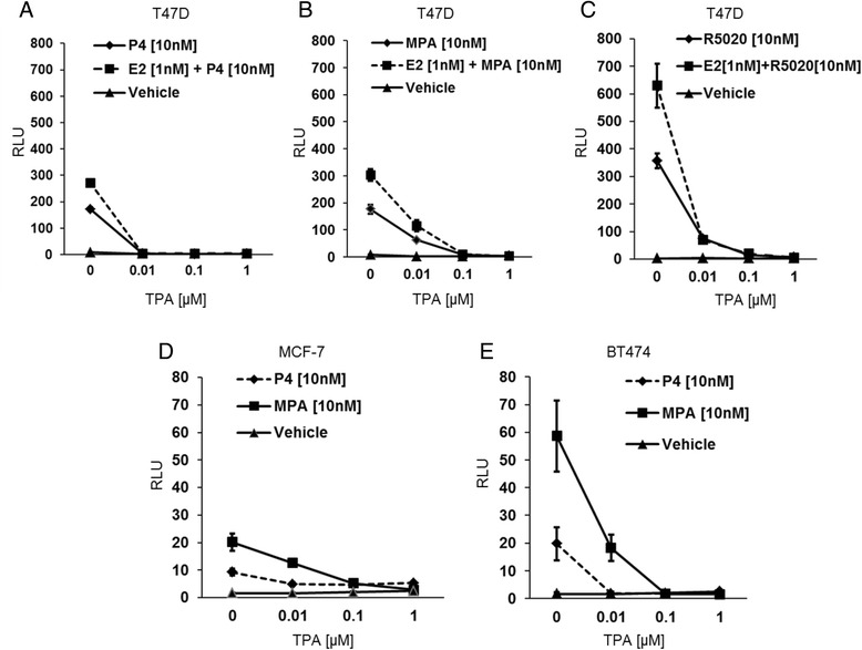 PRE promoter activity analysis by Dual luciferase assay. T47D, BT474, and MCF-7 cells were hormone-starved for 24 h and transfected with PRE-luc reporter plasmid along with phRl-TK Renilla control plasmid. The transfected T47D cells were treated with P4 ( a ), MPA ( b ), or R5020 ( c) ± TPA (10nM, 100nM, 1 μM) alone or in combination with E2 (1nM). The transfected MCF-7 ( d ) and BT474 cells ( e ) received P4 or MPA ± TPA (10nM, 100nM, 1 μM). Luciferase activity was quantified using the Dual- Luciferase Reporter Assay Kit. The relative PRE- luciferase activity was expressed as the ratio of the firefly luciferase/Renilla luciferase unit (RLU)