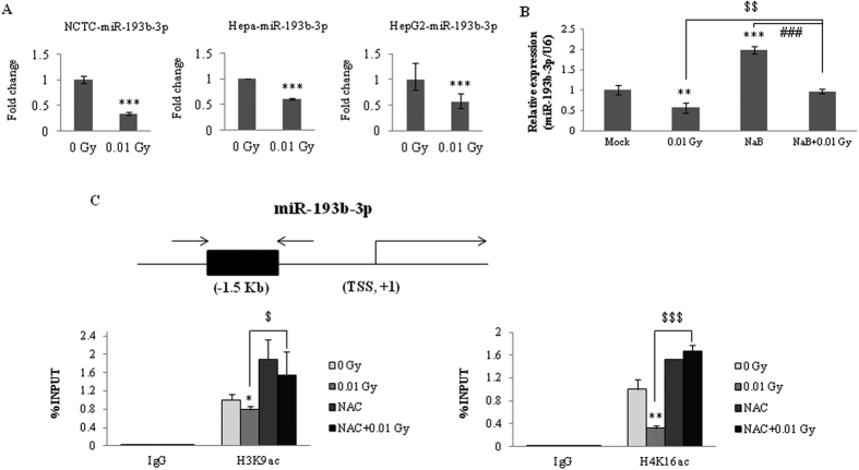 Involvement of histone deacetylation at the miR-193b-3p promoter regions in HepG2 cells exposed to 0.01 Gy irradiation. ( A ) Alterations of miR-193b-3p expression were examined in normal mouse cells (NCTC), mouse hepatoma cells, and human hepatoma cells (HepG2) by qRT-PCR. The cells were irradiated with 0.01 Gy (6.5 mGy/h). Six hours post-irradiation, miRNA expression was evaluated and reported as fold-change differences relative to the sham-irradiated controls. ( B ) When the cells were pretreated with NaB (a histone deacetylase inhibitor) for 24 h, alterations in miR-193b-3p expression were observed in response to irradiation in HepG2 cells. The data were normalized using a mammalian U6 gene and are expressed as the mean ± S.D. ( C ) Chromatin immunoprecipitation (ChIP) assays were performed to evaluate the histone deacetylation of the miR-193b-3p promoter regions in HepG2 cells with or without NAC pretreatment (20 mM) 3 h after exposure to 0.01 Gy irradiation. Chromatin was immunoprecipitated with the anti-H3K9ac, anti-H4K16ac, or anti-IgG antibodies, and DNA was analyzed by qRT-PCR using miR-193b-3p-specific primers. The results are shown as a percentage of the chromatin input. The ChIP samples were quantified by qRT-PCR. The input was used as an internal control, and IgG was used as the antibody control. The statistically significant differences between the non-irradiated and irradiated samples are indicated (* p