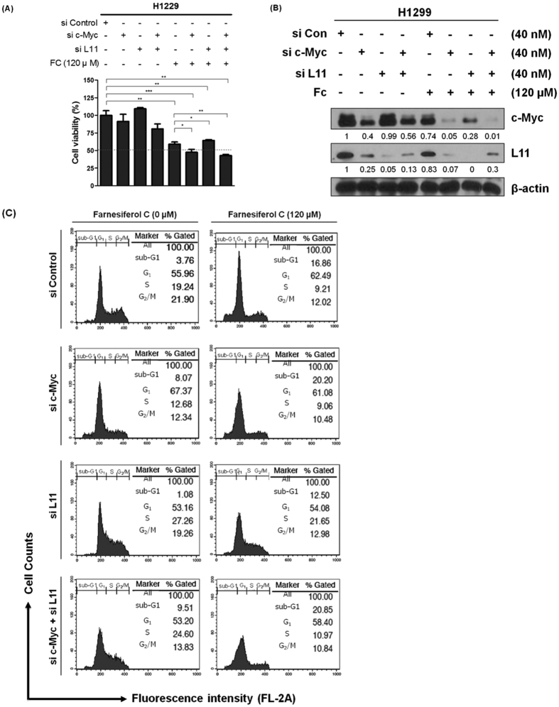Regulation of L11 and c-Myc is critically involved in apoptosis induced by FC in H1299 cells. ( A ) Effect of c-Myc and/or L11 depletion by siRNA on the viability of H1299 cells by MTT assay. Data represent means ± SD. *p