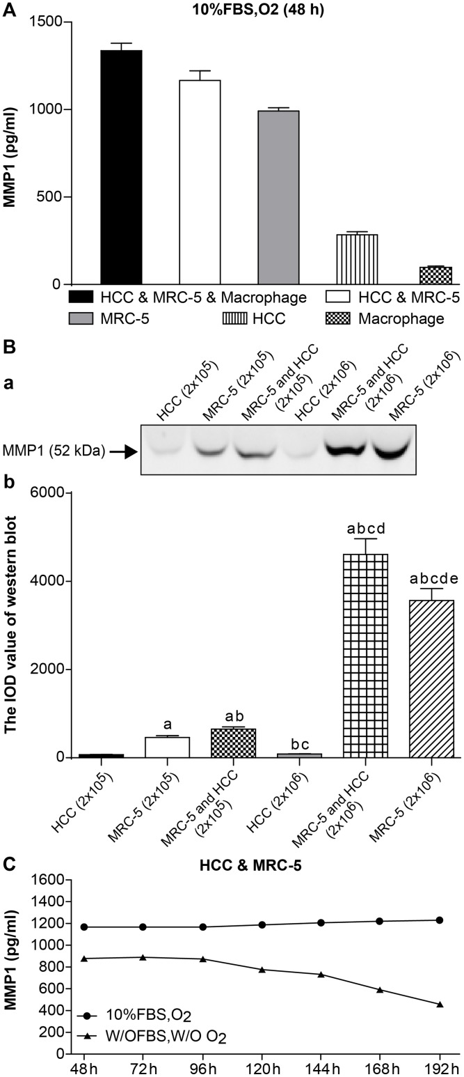 The expression of MMP1. (A) Expression of MMP-1 in 3D mono- and co-culture lung cancer models at 48 h detected by ELISA. The expression of MMP1 in HCC MRC-5 macrophage co-culture group was higher than that in HCC MRC-5 co-culture group, or MRC-5/HCC/macrophage mono-culture groups. There was almost no expression of MMP1 in the HCC/macrophage mono-culture group. (B) Expression of MMP-1 in 3D mono- and co-culture lung cancer model at 48 h detected by Western blotting. In Fig 1B, a, the molecular weight of MMP-1 is 52 kD. From the left to right, the lanes are: HCC mono-culture group (2 x 10 5 cells); MRC-5 mono-culture group (2 x 10 5 cells); MRC-5 and HCC co-culture group (2 x10 5 cells); HCC mono-culture group (1 x 10 6 cells); MRC-5 and HCC co-culture group (1 x 10 6 cells); MRC-5 mono-culture group (1 x 10 6 cells). Expression of MMP-1 in co-culture groups was higher than in mono-culture groups (both 2 x 10 5 cells and 1 x 10 6 cells). Expression of MMP-1 in the 1 x 10 6 cell group was higher than the 2 x 10 5 cell group, regardless of mono-culture or co-culture group designations. In Fig 1B, b, the mean IOD values of the Western blot are shown. (C) Expression of MMP-1 under different co-culture conditions. Expression of MMP1 under 10% FBS and O 2 (10% FBS cell culture medium with O 2 ) was higher than that under w/o FBS and w/o O 2 (without FBS and without O 2 ) at 7 different time points. Furthermore, the expression trend of MMP1 under the condition of w/o FBS and w/o O 2 continued to decline from 120 h.